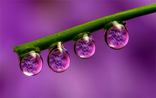 Purple Rain Drops from naldzgraphics.net