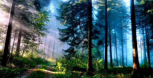 Mystic Forest From http://new-hdwallpaperz-blogspot-com