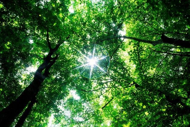 sun-through-trees